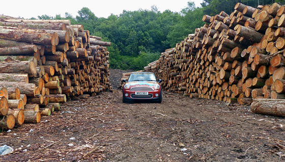 Local timber source at Duchy Timber.