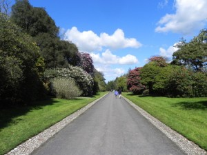 Tregothnan Open weekend