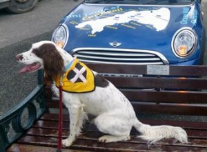 Ticket St Piran's day